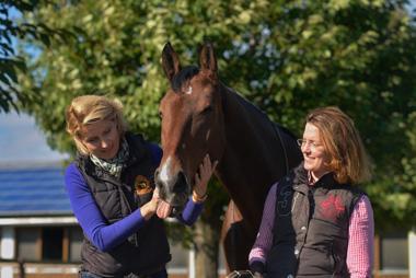 beruhigung und gelassenheit fur pferde